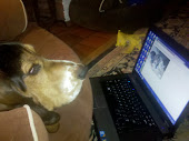 The Blog Hound at Work