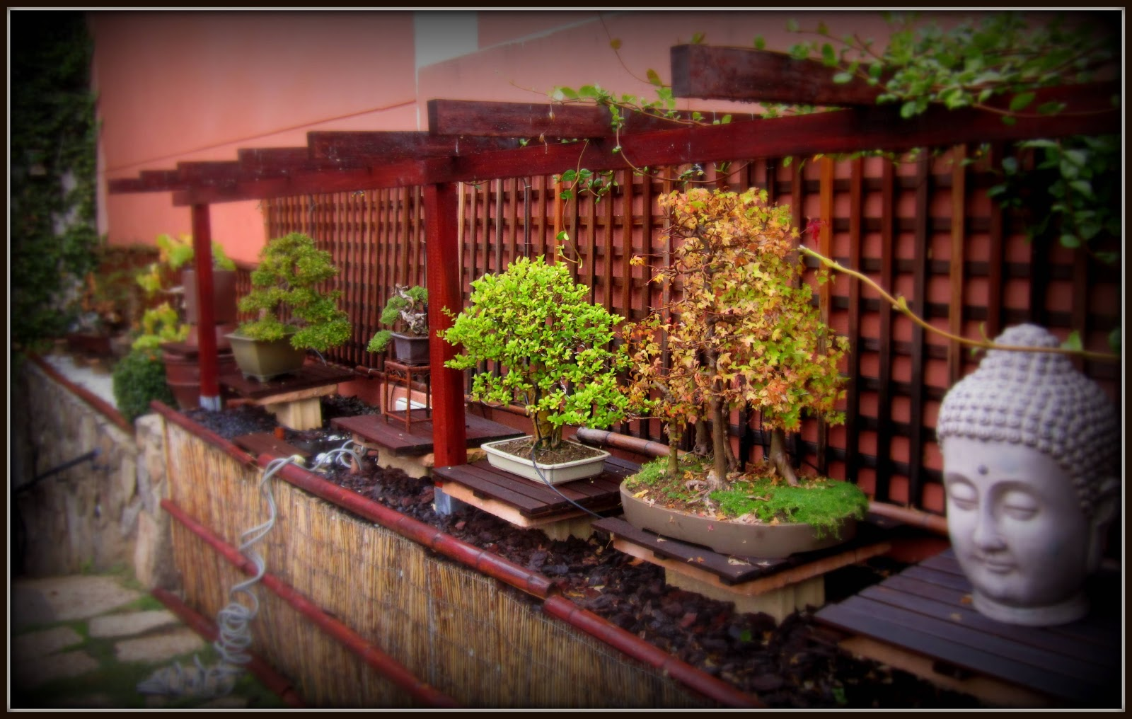 Mi pasion por el bonsai oto o en mi jardin for Cancion secretos en el jardin