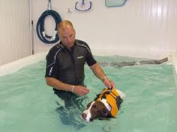 Hydrotherapy on Dogs