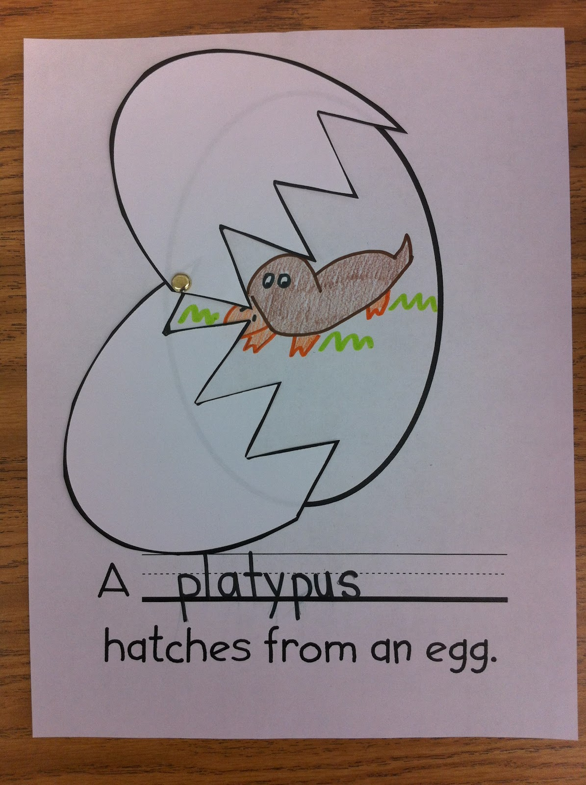 first grade unit on eggs