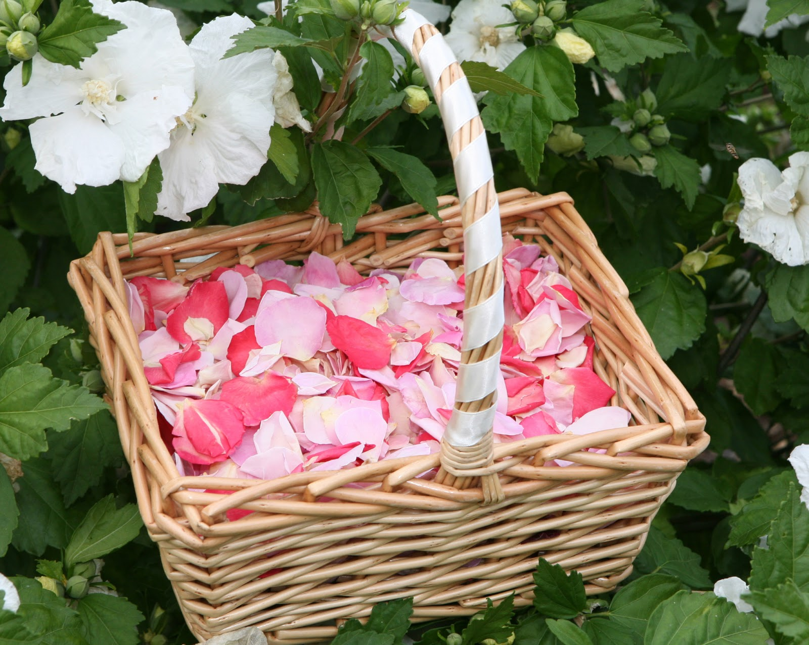 Flower Girl Baskets Petals : The confetti choosing your petal tips