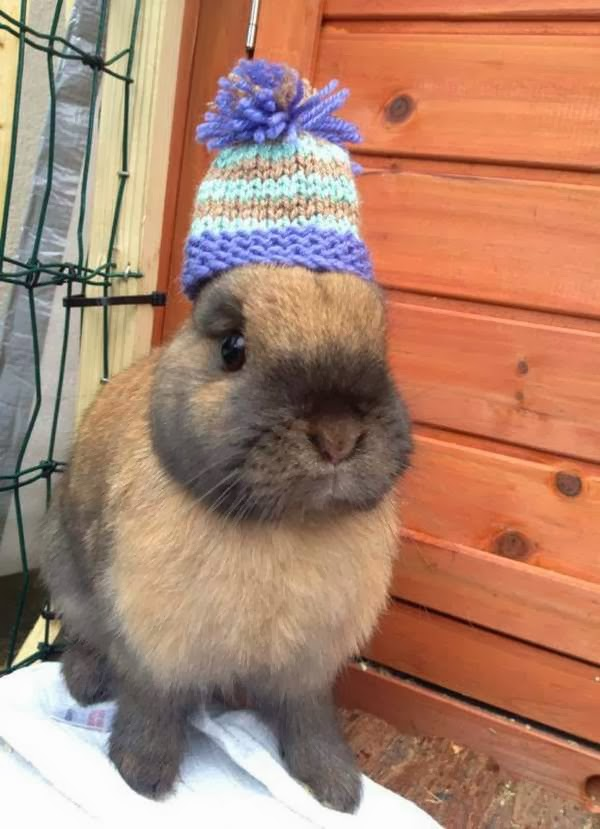 Funny animals of the week - 22 November 2013 (35 pics), bunny wears winter hat