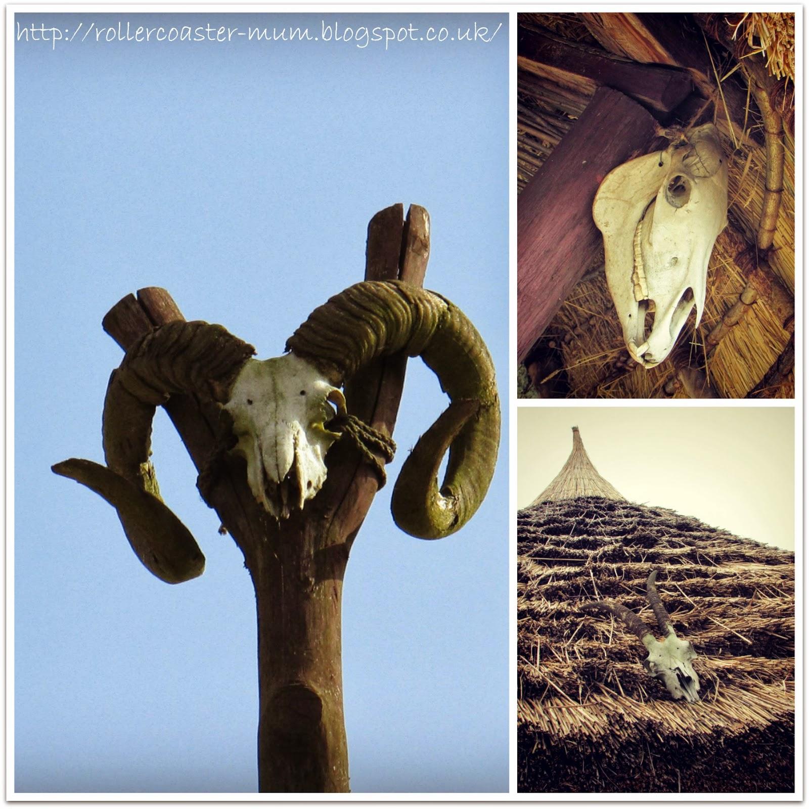 animal skulls in the Celtic Village, Butser Ancient Farm