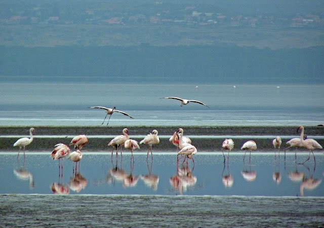 Buy wallart of Flamingos
