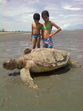 Tartaruga morta encalha na praia de Arpoeira