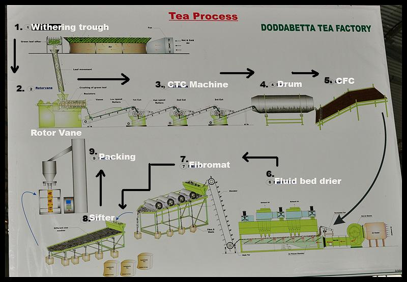 manufacturing tea process essay