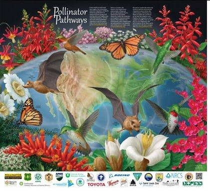 The 2012 Pollinators Poster Is Now Out Its Called Pollinator Pathways It Also Offered By Natural Resources Conservation Service