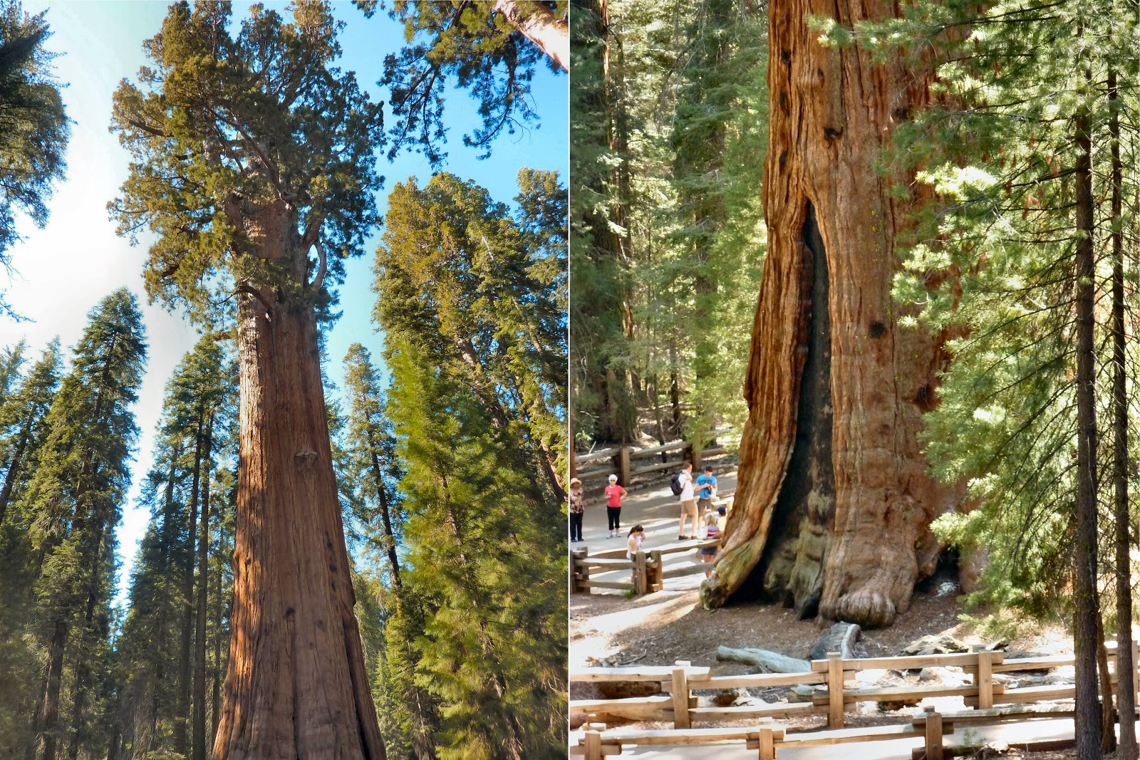 How Was Your Trip   Yosemite And Sequoia