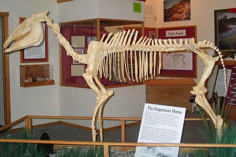 hagerman horse exhibit