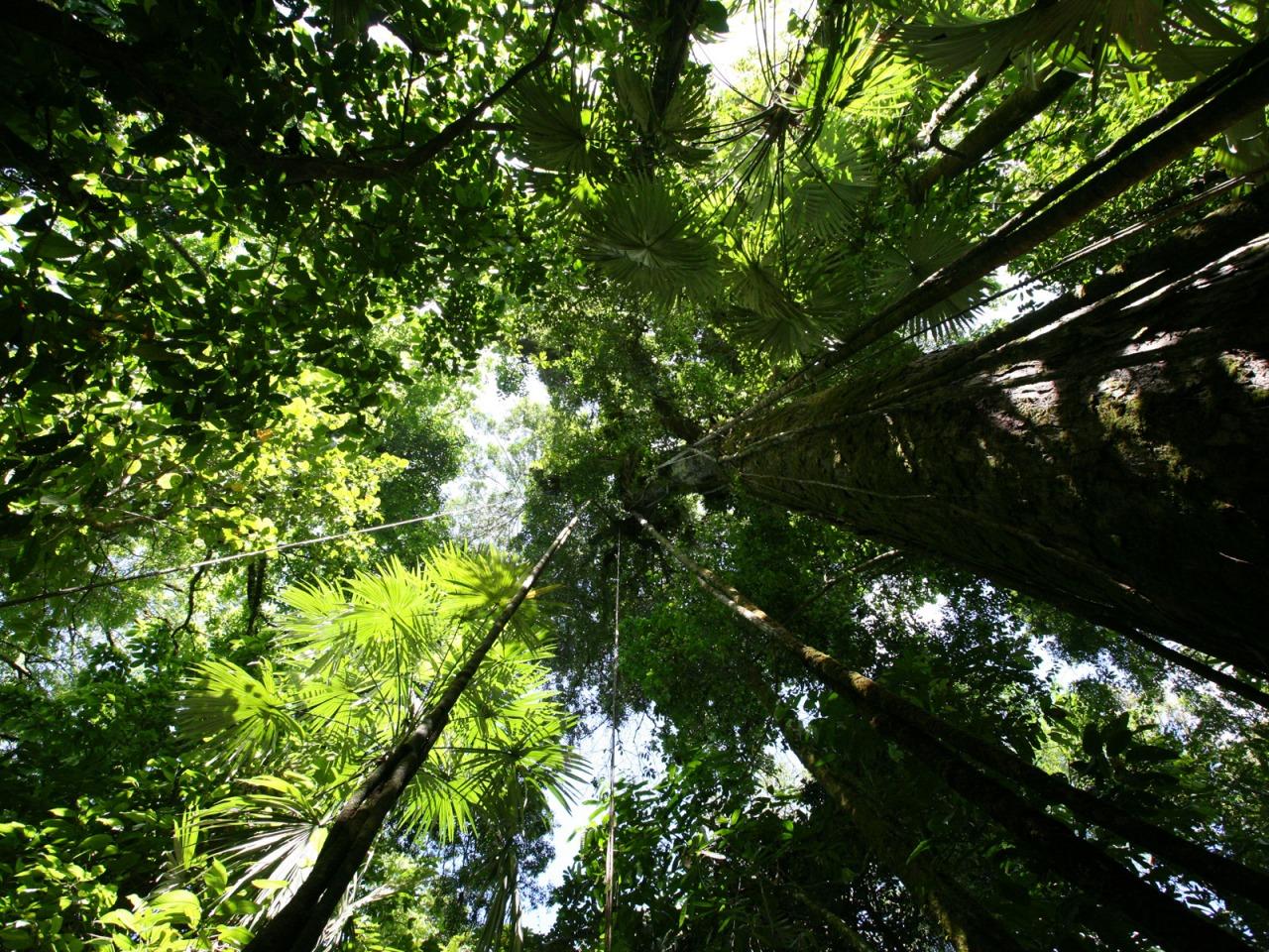 rainforest hd desktop wallpapers - photo #13