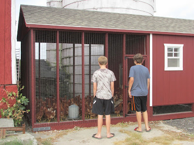 Picking Out Chickens for our Coop