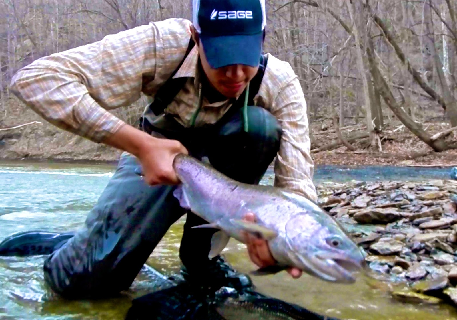 D h lake erie steelhead fishing report 4 11 4 13 for Erie steelhead fishing report