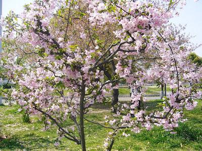 花博記念公園鶴見緑地ウォーキング