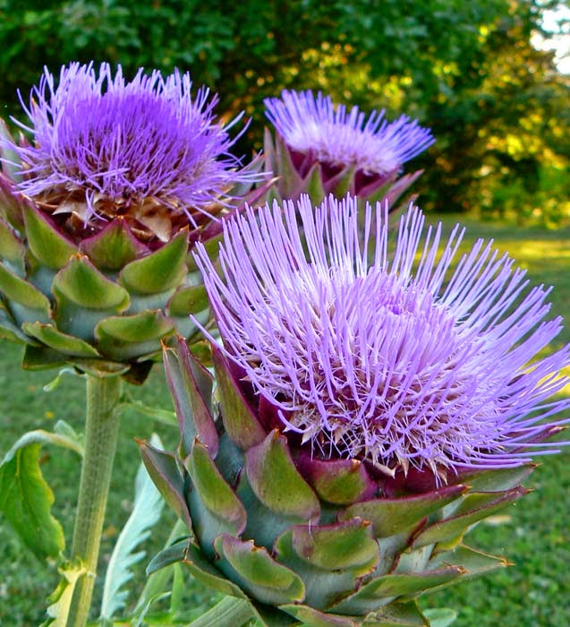 Happy National Artichoke Hearts Day