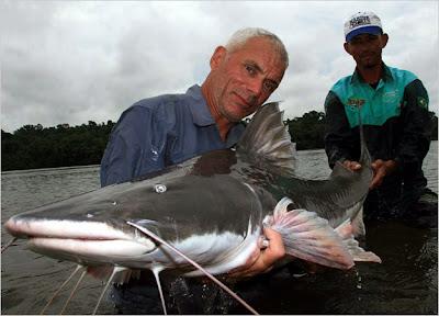 piraiba catfish situslakalaka 9 Monster Sungai Yang Masih Ada Hingga Saat Ini