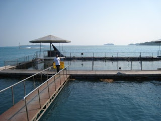 Fasilitas Underwater Aquarium Pulau Putri Island Resort Seribu Jakarta