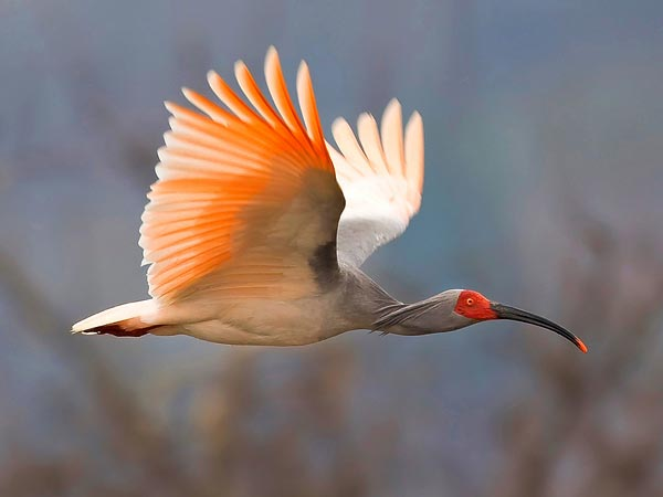 Best Rare Bird Photos Of 2011 National Geographic