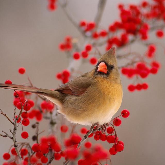 foto burung-burung cantik