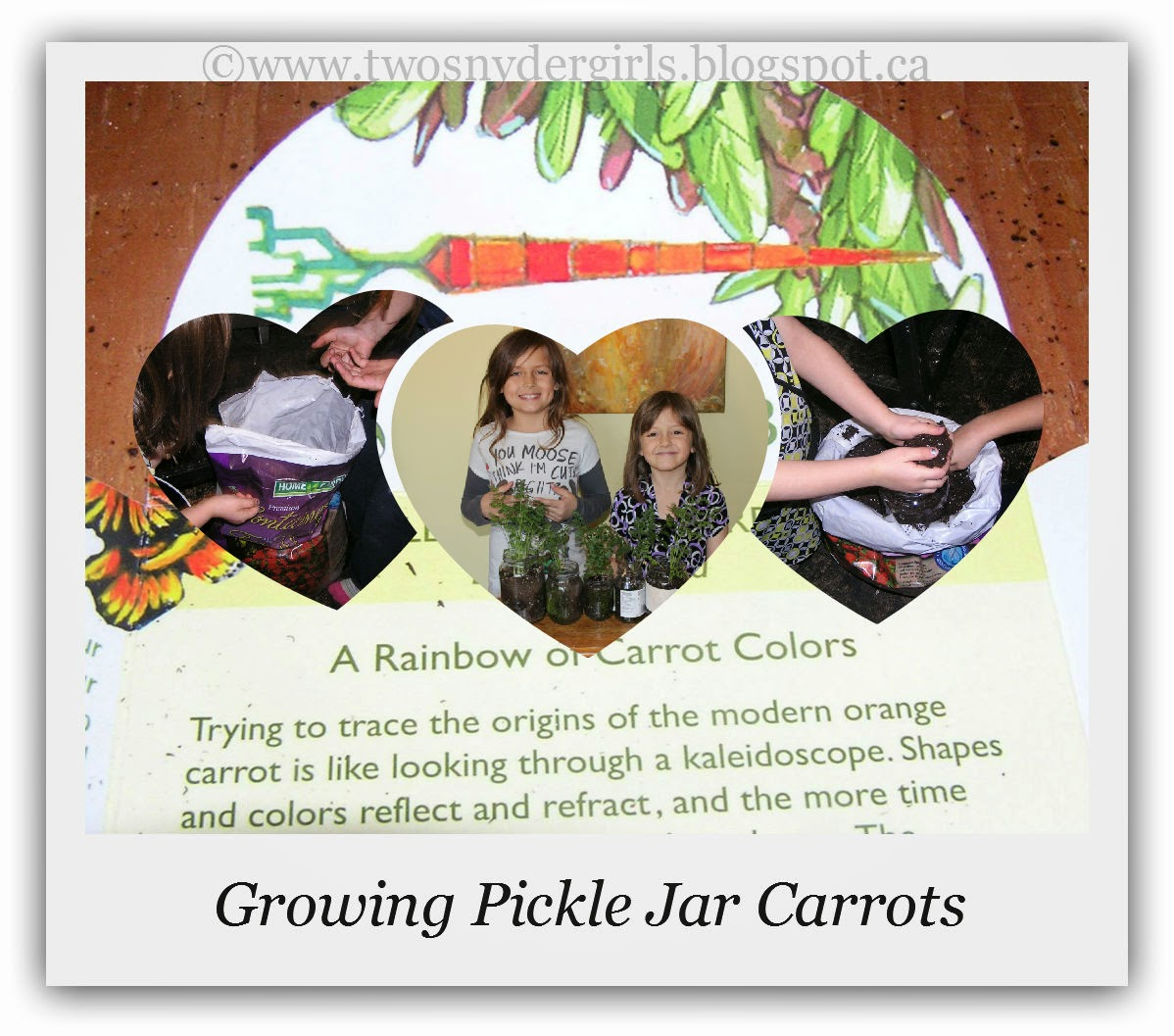 Growing Pickle Jar Carrots