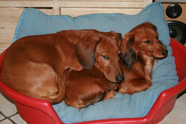 Preferência Qual a melhor casinha para o meu cão?   Cão Nosso De Cada Dia BB32