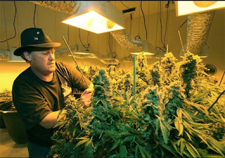 Best equipment and tips for growing marijuana