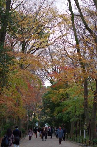 2014年糺の森の紅葉