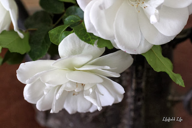 iceberg roses say thank you