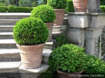 Il piccolo giardino di l ode al bosso for Alberelli da vaso per esterno