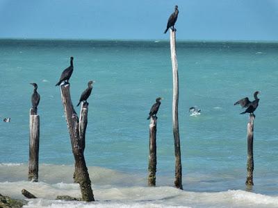 Holbox Island Travel - mayanexplore.com