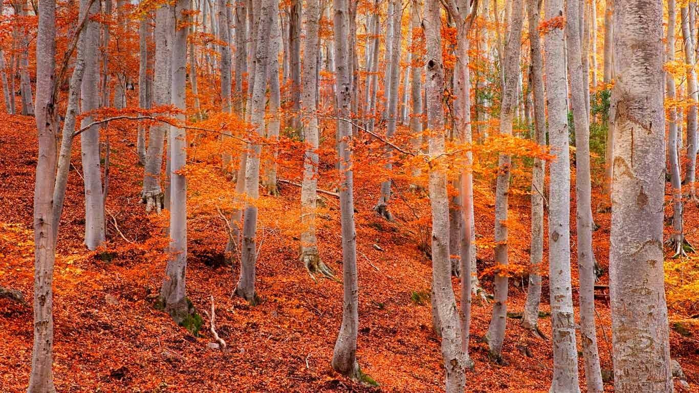 Dehesa de Moncayo Natural Park near Zaragoza, Spain (© David Santiago Garcia/Aurora Photos) 19
