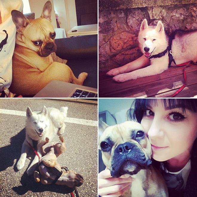 fashionblogger-sibirischerhusky-franzoesischebulldogge-mocca-angel-bloggerhund-drschaette-hundefutter-vollwertfutter