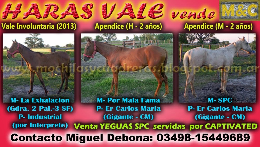 HS VALE - POTRILLOS