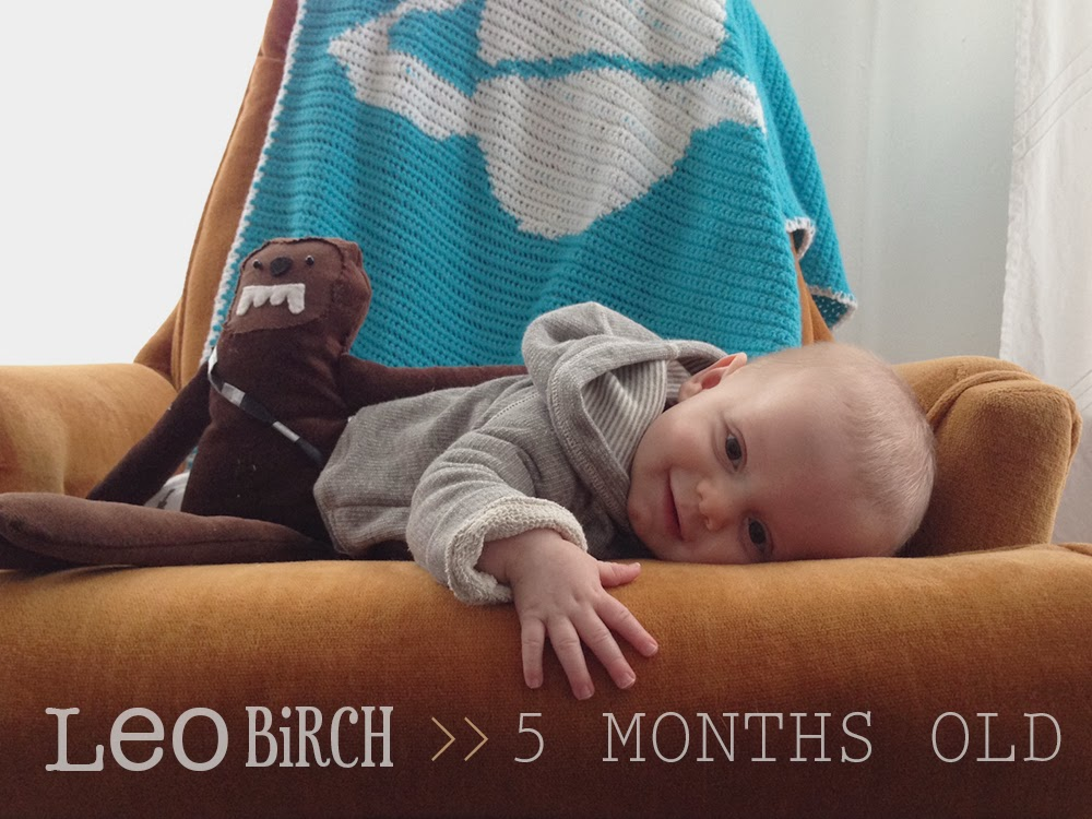 Baby boy milestones at 5 months old. via :: Oh, Hopscotch!
