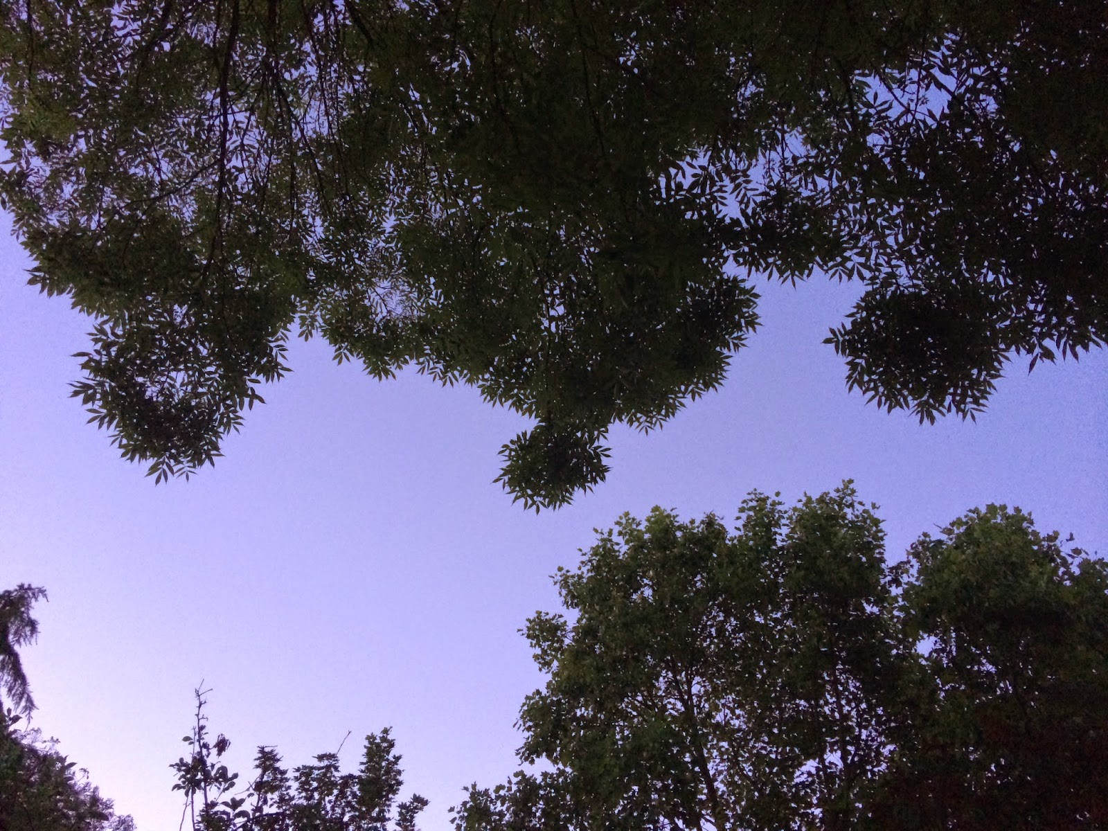 trees and sky