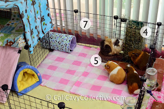guineapig cage accessories