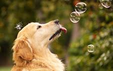 Dal calendario dei cani STRAPPA E VINCI