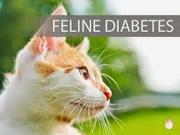 Cats And Feline Diabetes