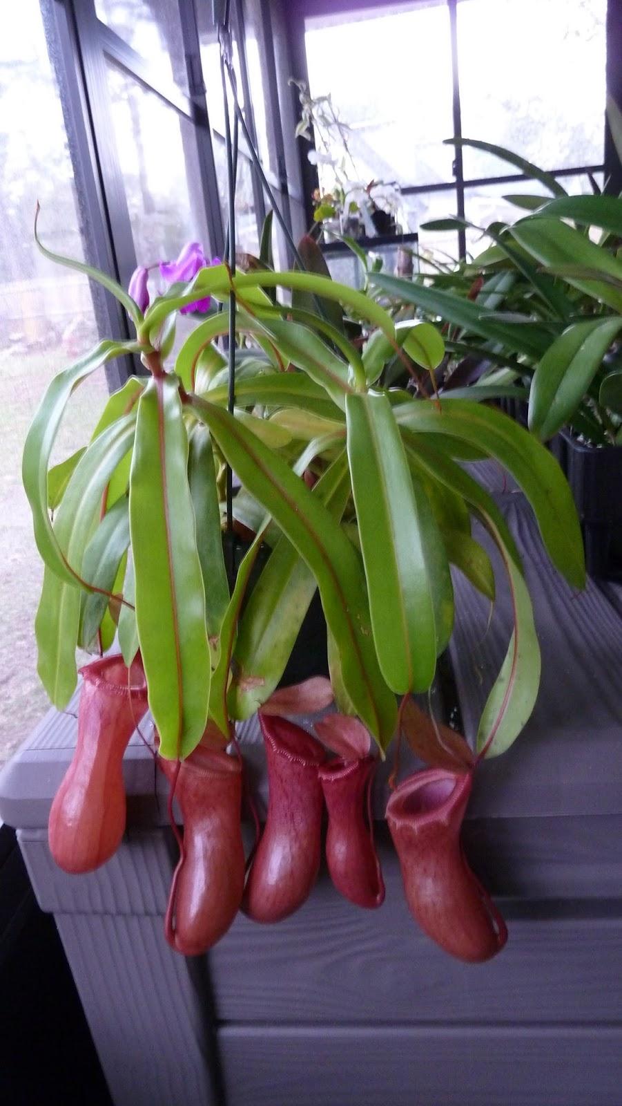 Hooray! Plants!: A Few...