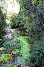 La bassa situada més amunt del canal de Sant Miquel Xic