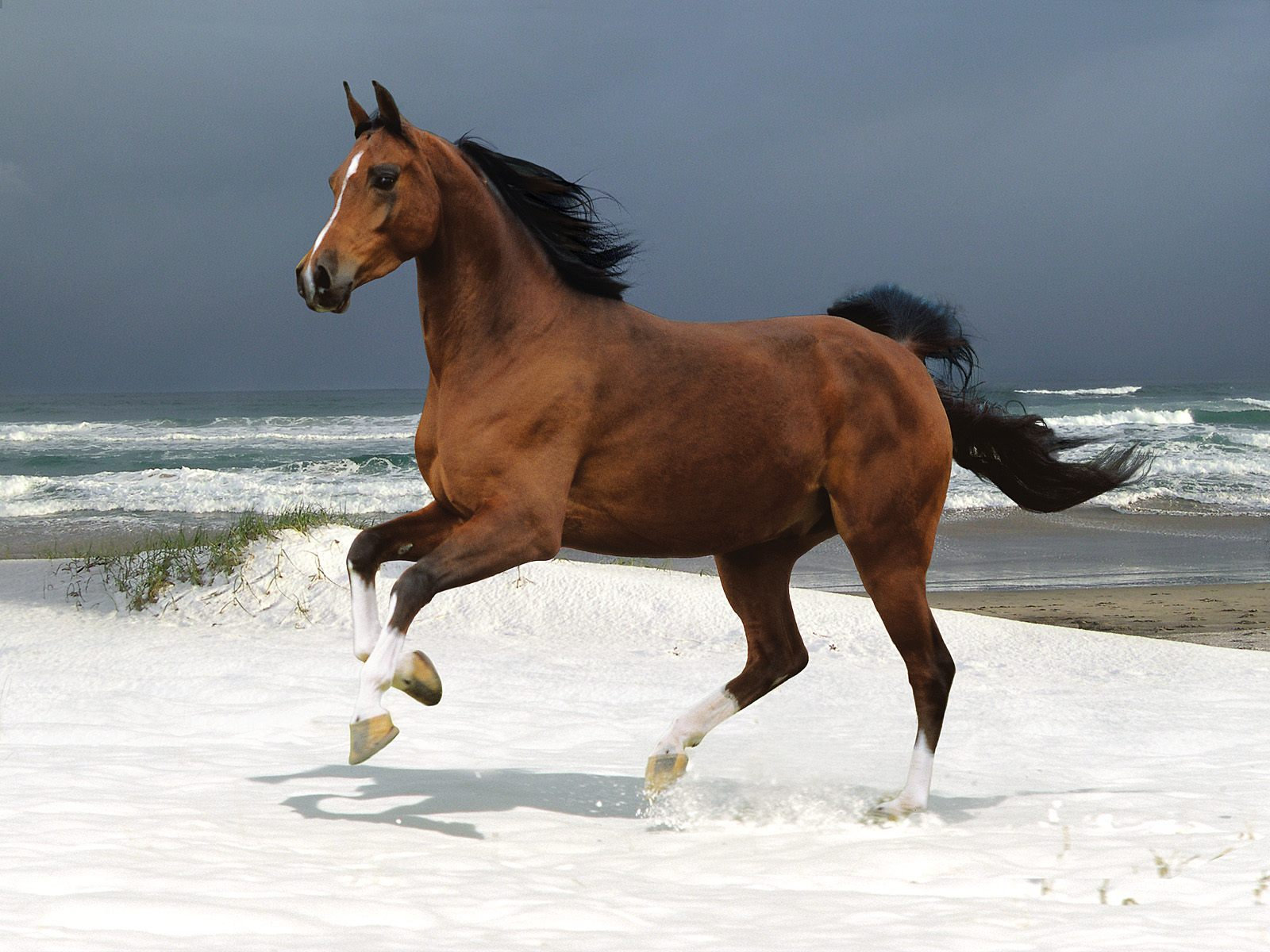wild horse hd wallpapers - photo #21