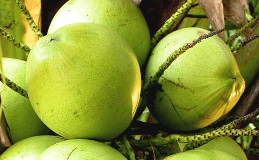 Mencerahkan wajah secara alami dengan air kelapa