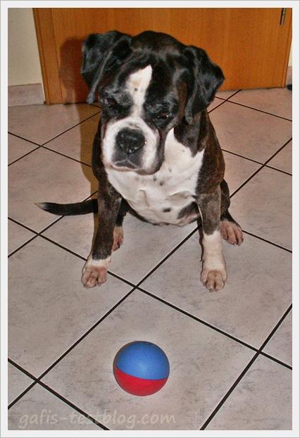 Boxer Ivy mit dem TRIXIE Activity Snack-Ball