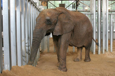Showme elephants recent updates at for Elephant barcellona