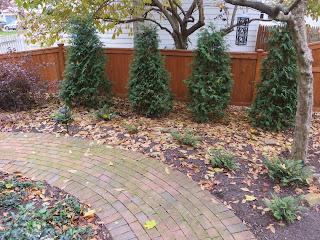 garden full of fallen leaves