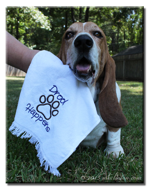 Bentley Basset getting his mouth wiped with a Drool Happens towel.
