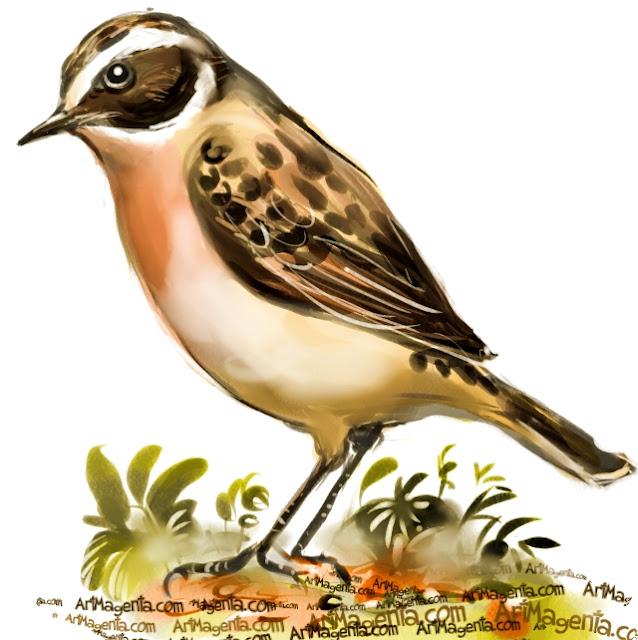 Buskskvätta är en fågelmålning av Artmagenta