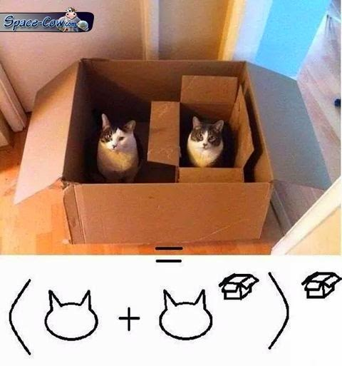 funny animals cat box