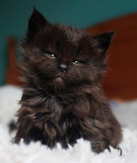 gatos mimos
