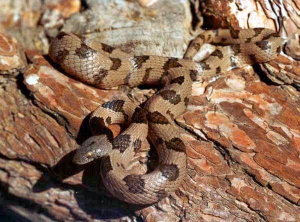Serpenti di tutto e di pi marzo 2014 for Veleno per serpenti