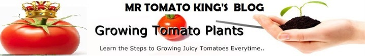 Mr Tomato King's Blog